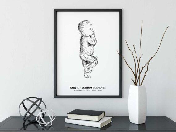 Bebis 1:1 födelsetavla